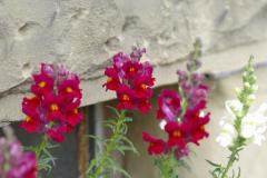 Blumen.2